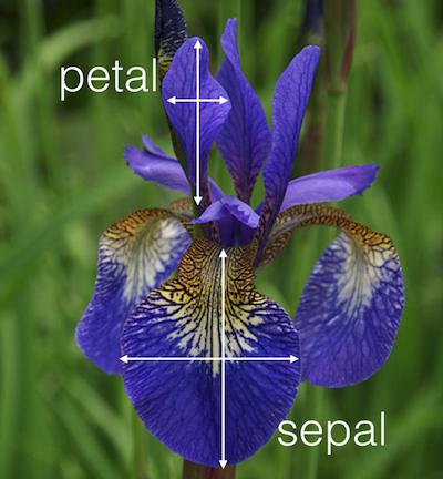 GitHub - EdoVaira/Iris-Neural-Network: Iris Neural Network