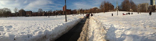 It was a beautiful afternoon to be out on Boston Common with your dog.