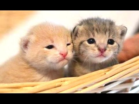 Compilation of cute kittens