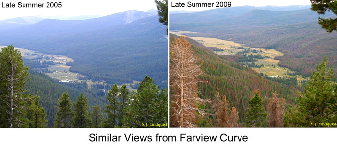 Image_Bark_Beetle_Farview_Curve