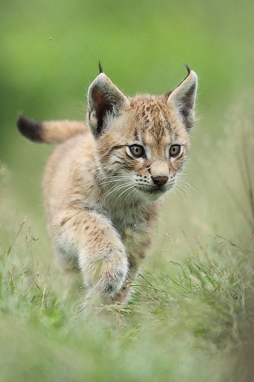 Put a link to a cute animal picture inside the parenthesis-->