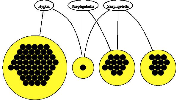 Evaniidae