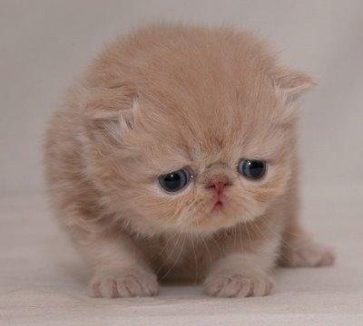 sad kitteh
