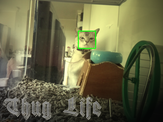 Thug cat detected with OpenCV