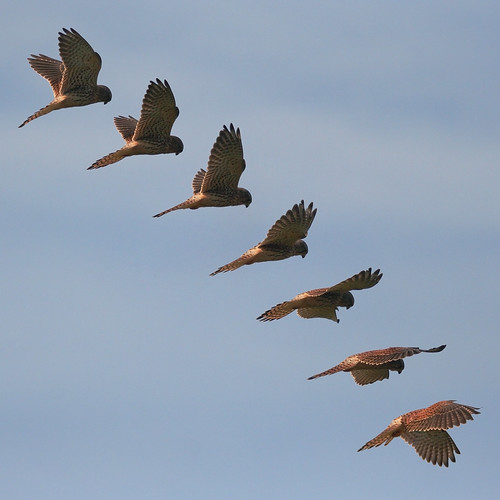 Kestrel Composite (c) 2007 Mark Kilner