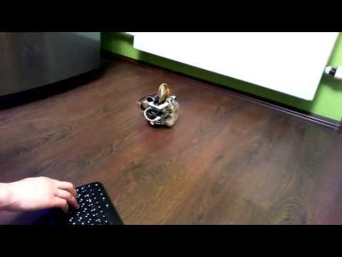 Мобильный робот на базе Raspberry Pi