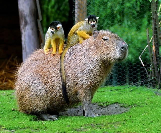 Monkey Patch Capybara