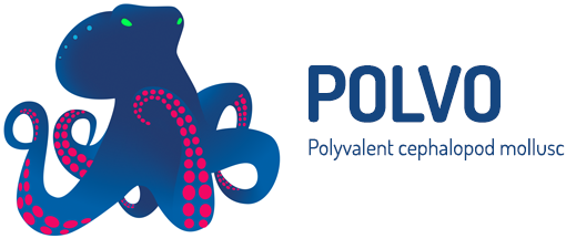 Polvo - Polyvalent cephalopod mollusc