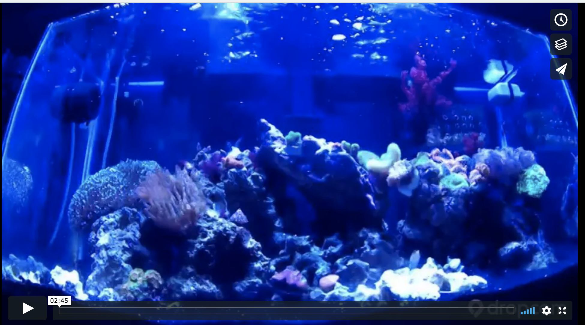 time-lapse coral reef video