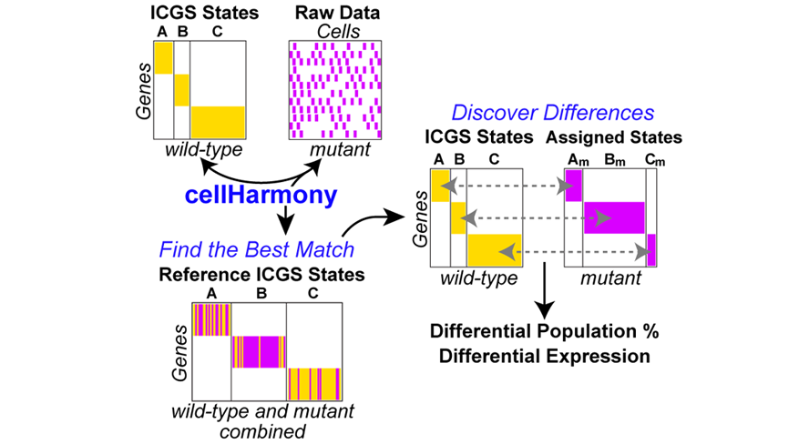 cellHarmony workflow