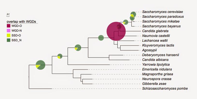 Pie Charts Evolgeniusteamevolgenius Wiki Github