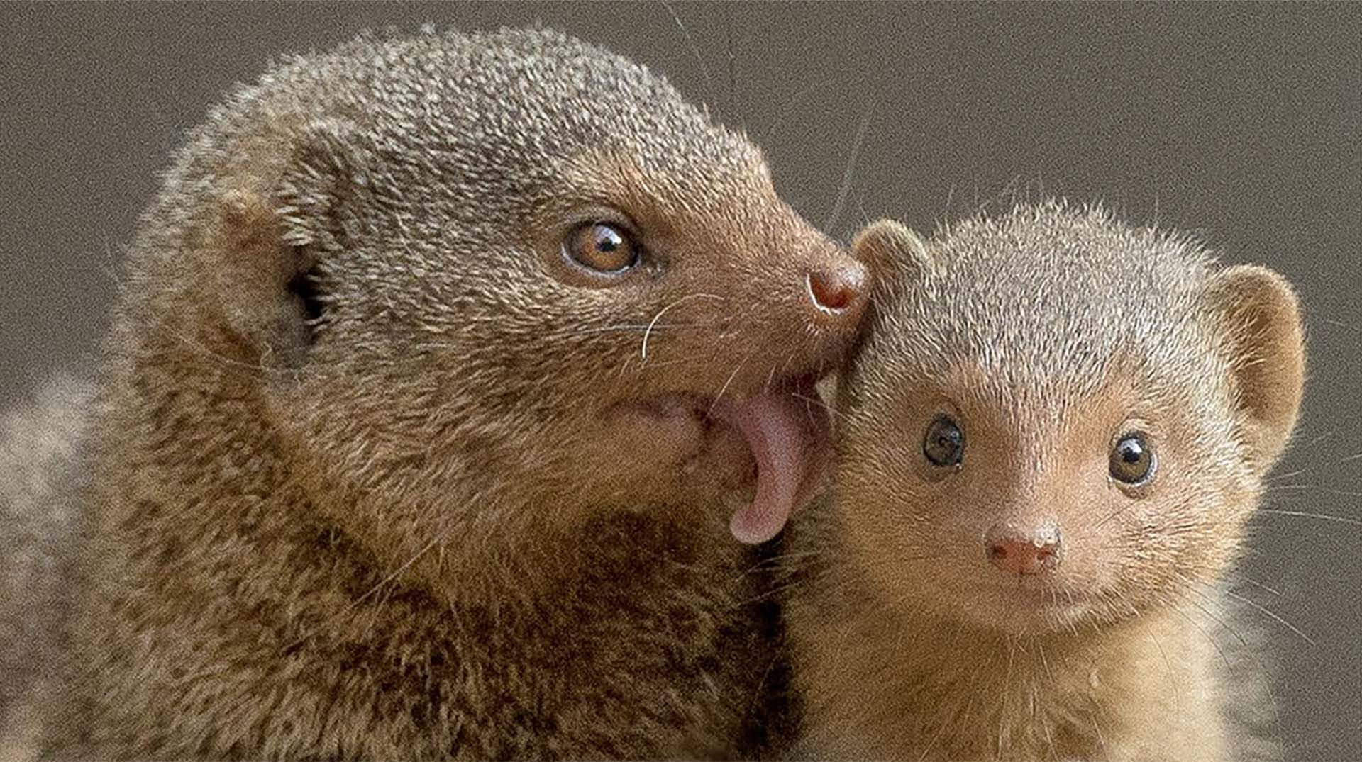 github alonronin mockingoose a jest package for mocking mongoose