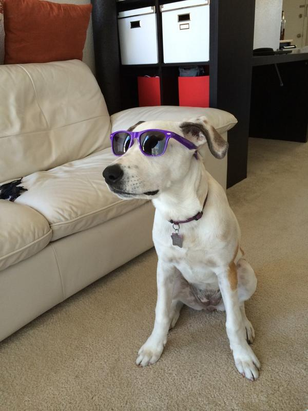 my dog: Jilly
