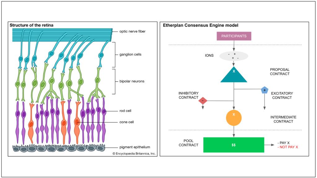 The Etherplan Consensus Engine - 以太计划共识引擎