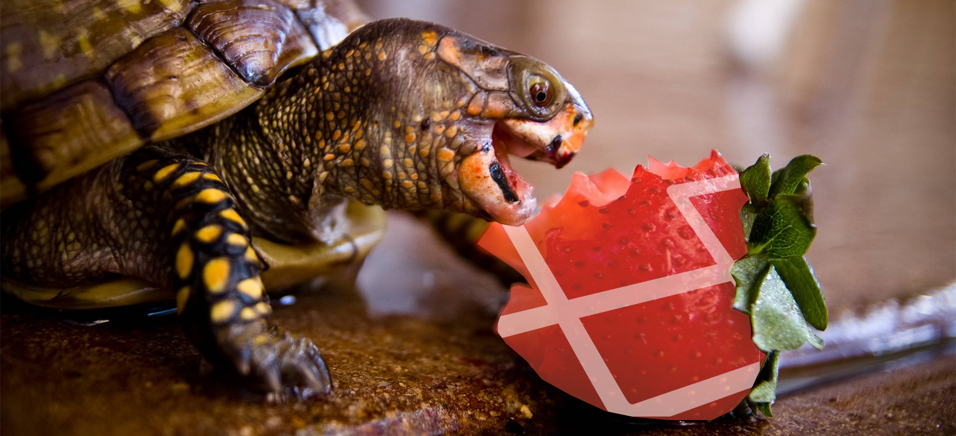Turtle - пакет для laravel всего по чуть-чуть