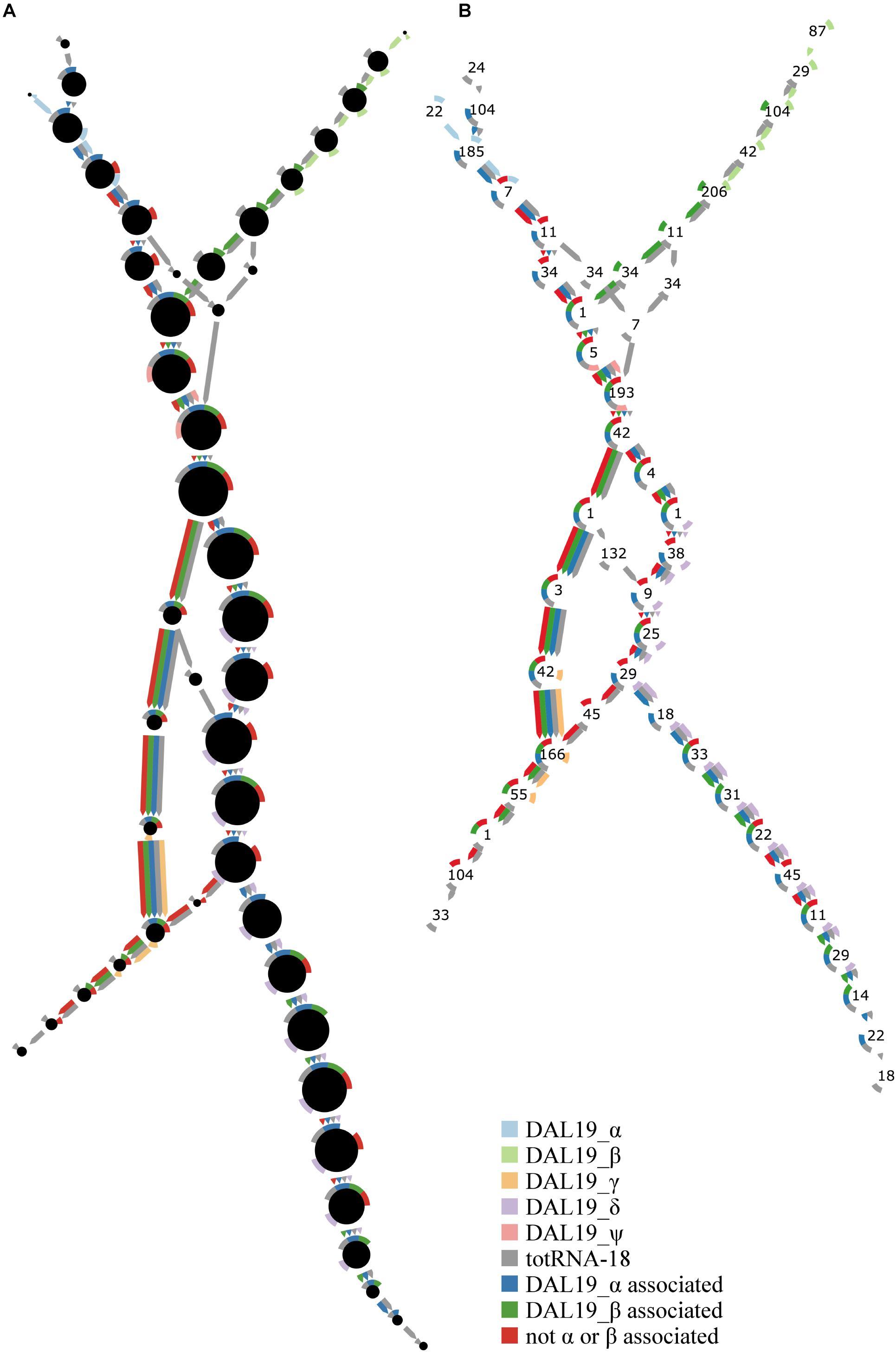 example_image