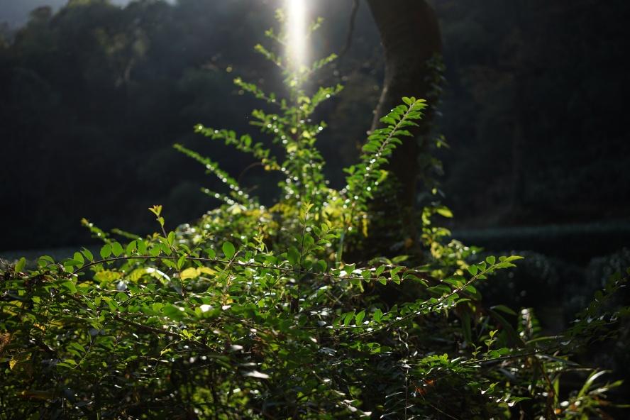 beautiful_photo_6