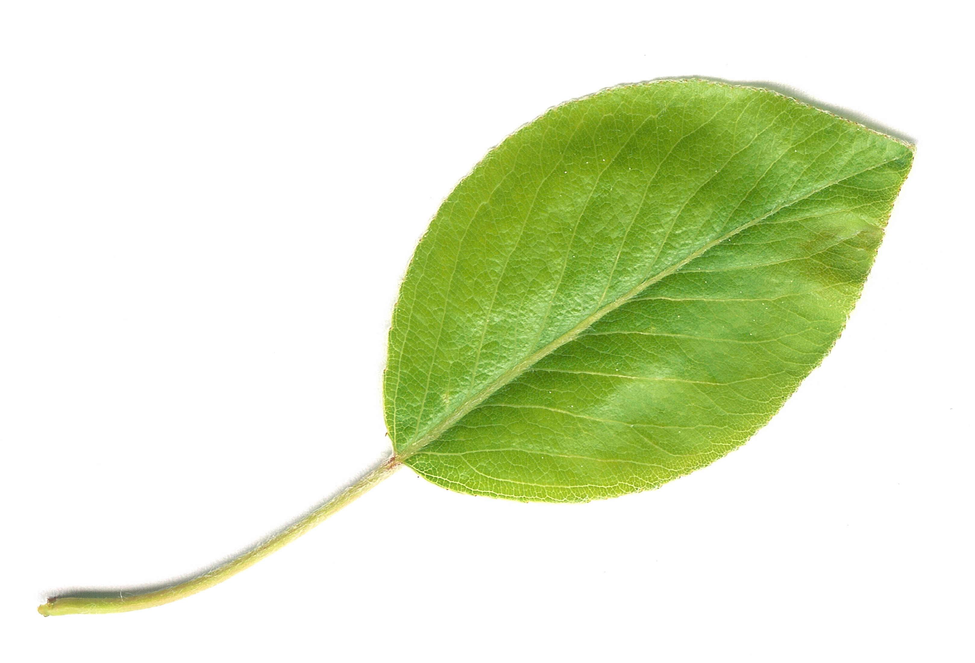 Github Vapor Leaf An Extensible Templating Language