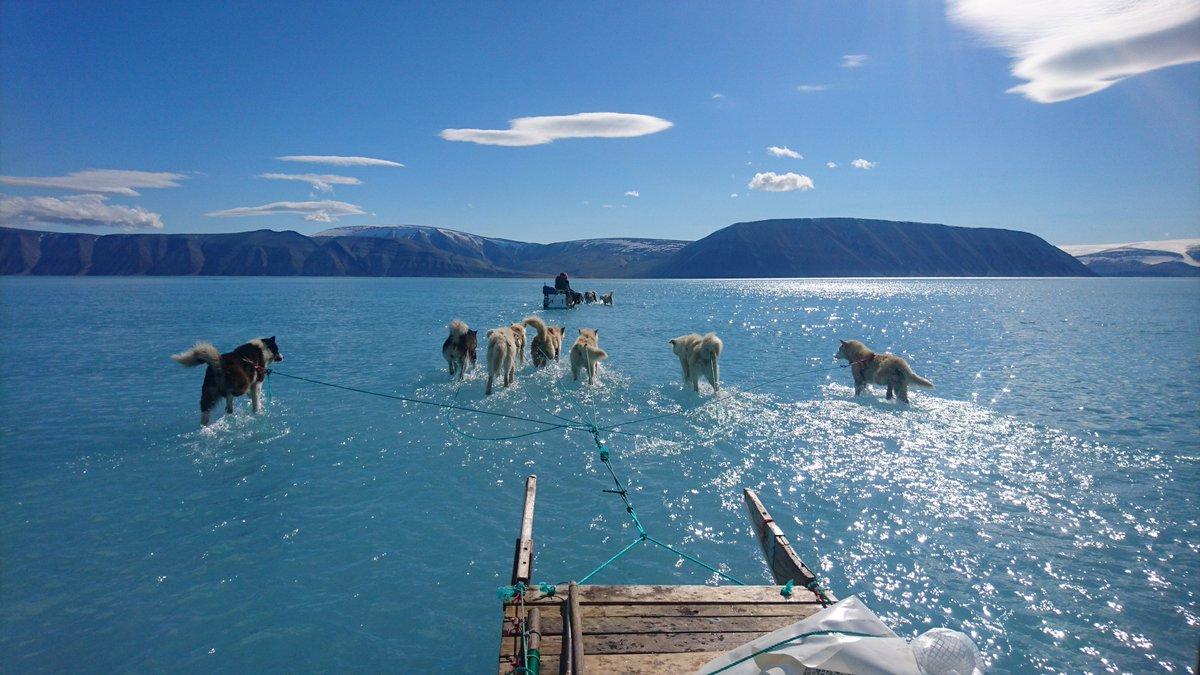 hounds on melting ice sheet on water walking like jesus in the ocean