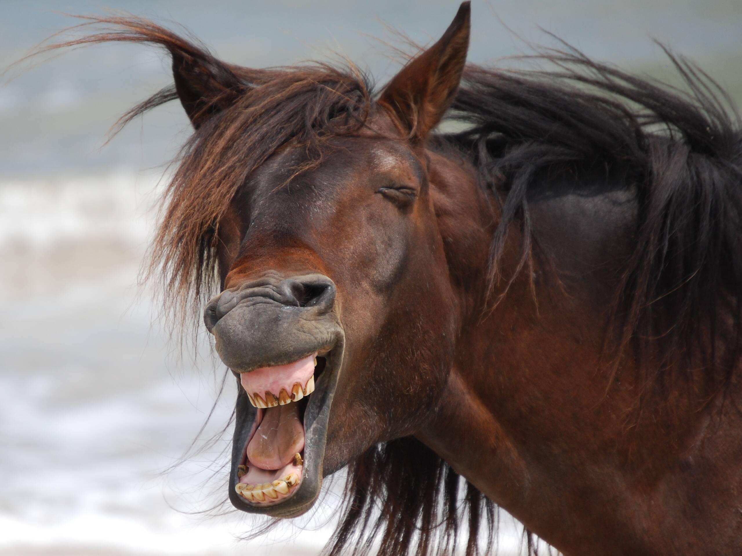 Смешные картинки коня, христос воскрес