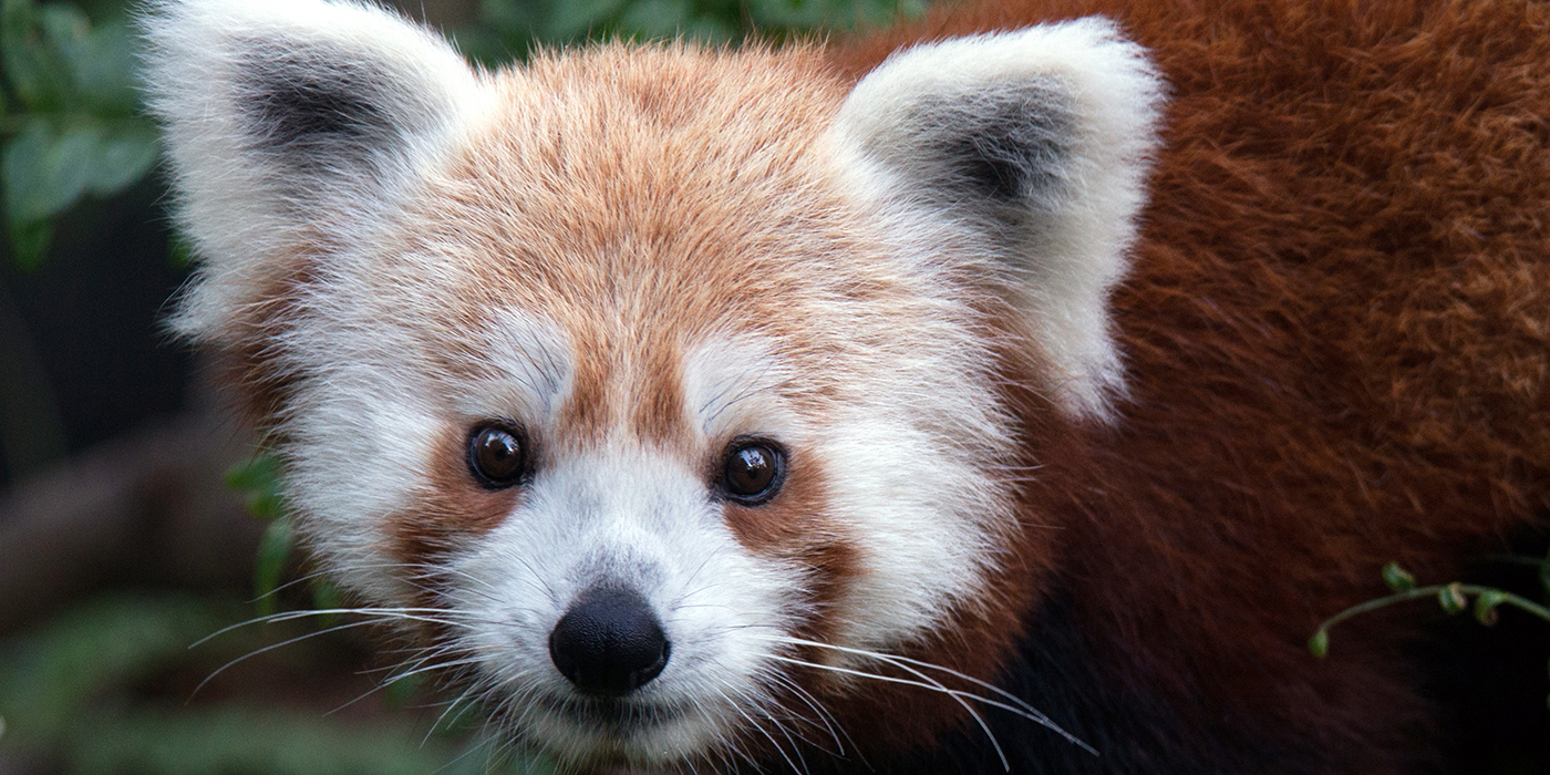 put a cute animal picture link inside the parentheses