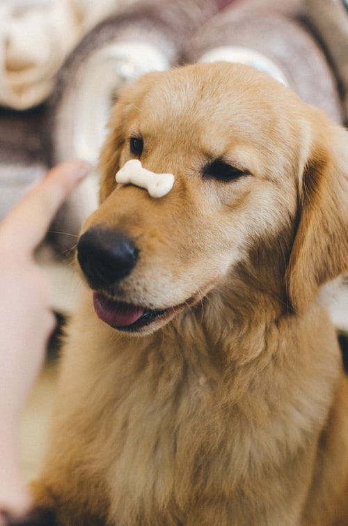 A picture of a cute dog