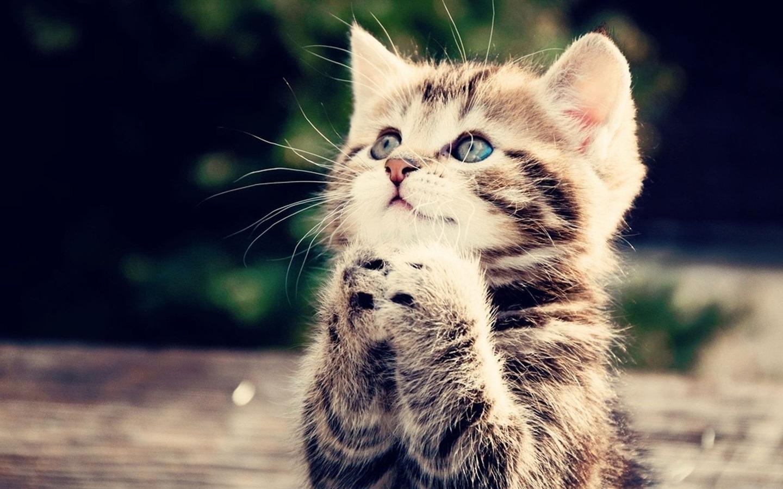 pray_kitteh