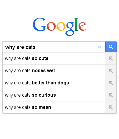 why are cats