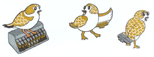 Plover birds
