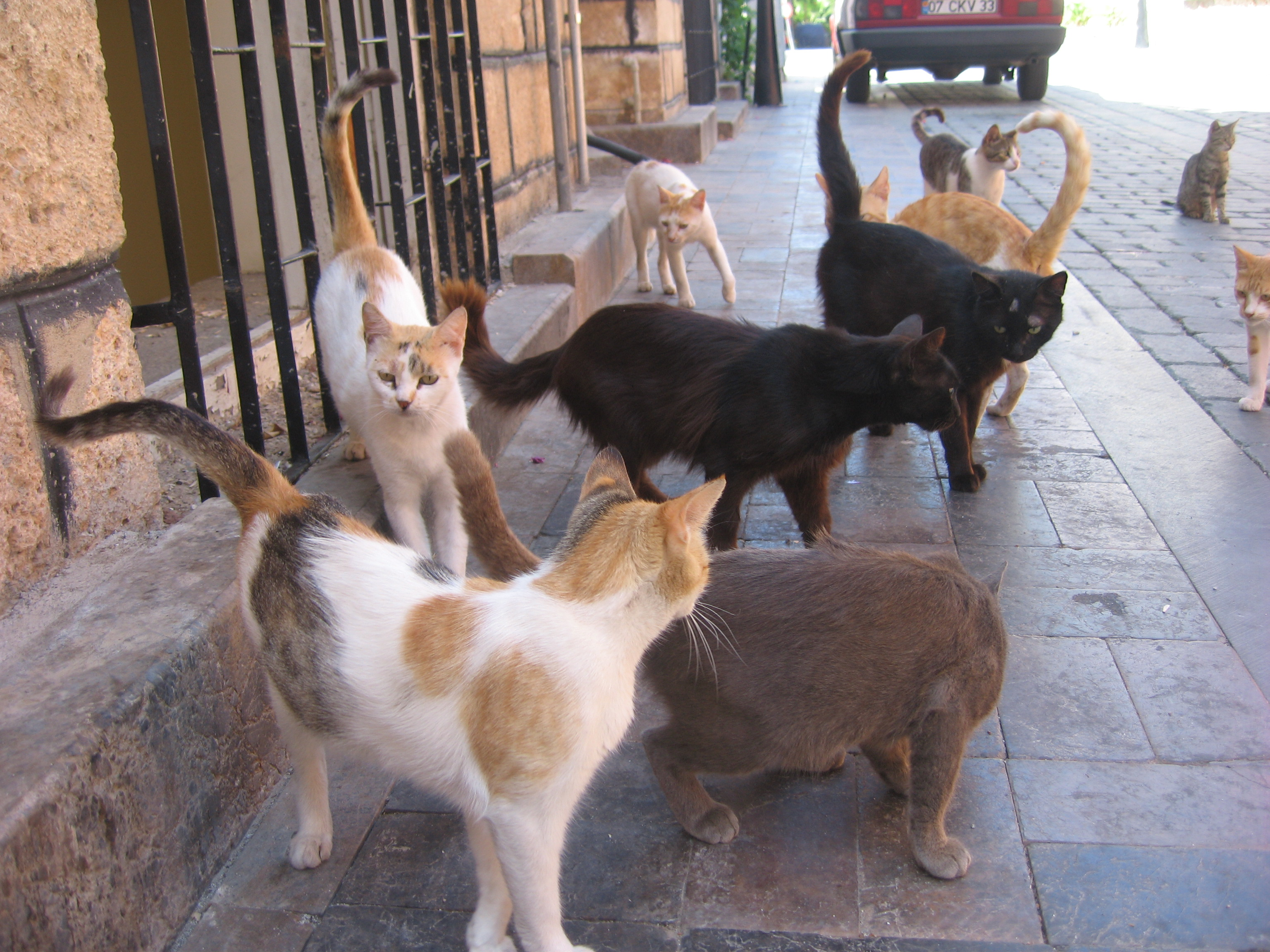 Herd of cats