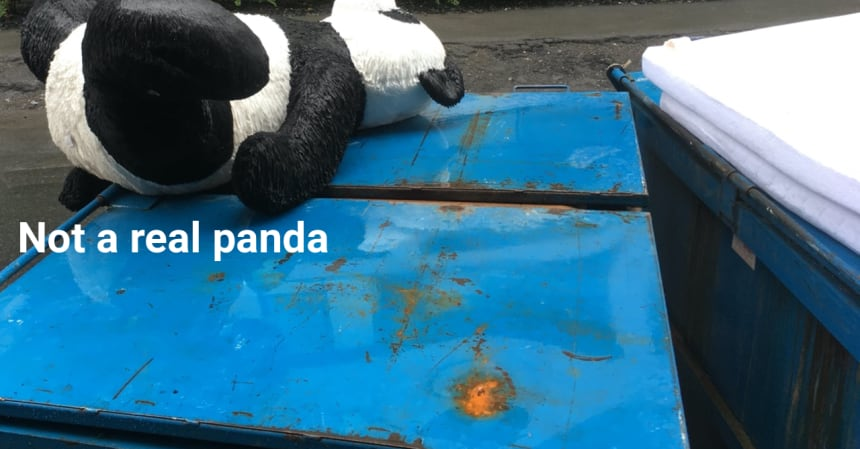 A picture of a stuff toy panda laying on a dumpster. This is my GitHub extended profile image.