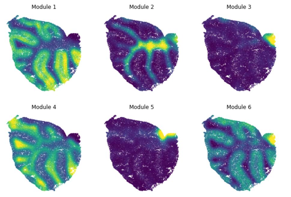 Spatial Gene Modules